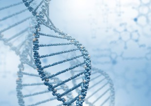 BRCA1 BRCA2